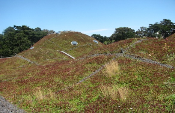 Living Roof at California Academy of Sciences Museum