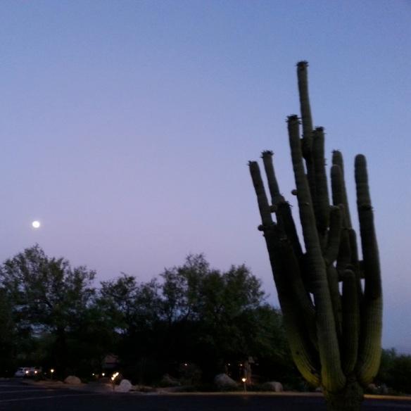 Sunset at the Loews Ventana Canyon.
